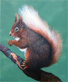 George Kitching painting of a squirrel