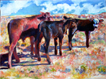 Painting of Aberdeen Angus Calves by D C Taylor